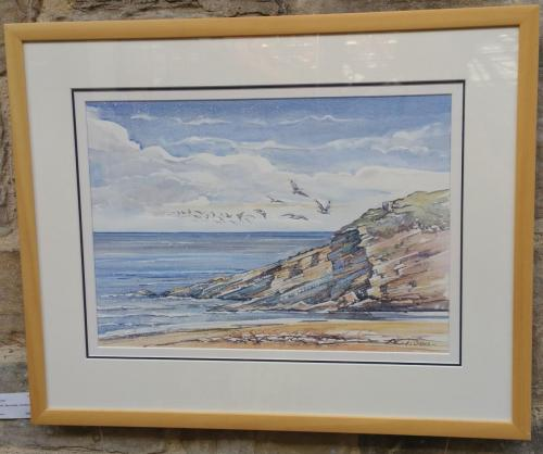 67 - Kittiwakes Berriedale Scotland - Andrew Kerr