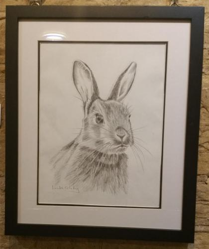 Drawing 2 - Bunny - Linda Coleby
